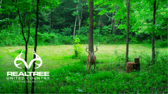 buck looking at a trail cam, green grass, green trees