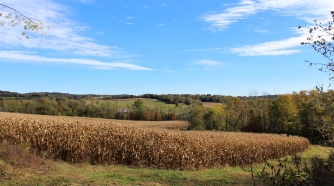 Brownsville Road land picture with trees, corn field, blue skies